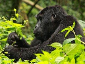 6 Days Adventurous Wildlife Safari in Uganda