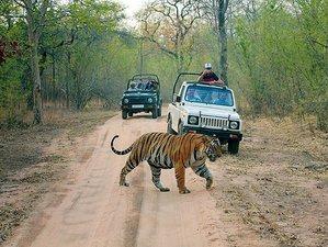 2 Days Ranthambore Jungle Safari in Rajasthan, India