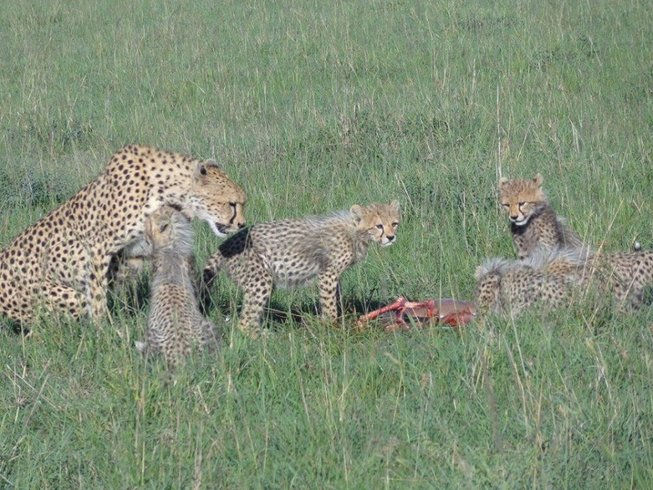 3 Days Budget Safari in Masai Mara, Kenya