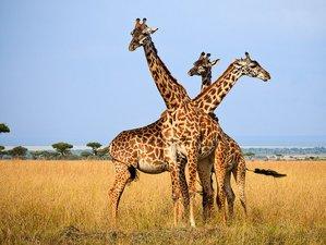 7 Days Amboseli, Tsavo West, and Tsavo East National Park Safari