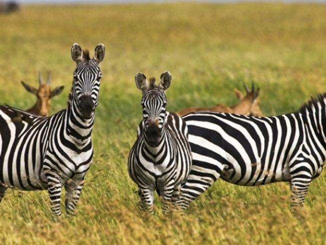 8 Days Adventure Safaris in Arusha, Tanzania