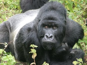 7 Days Exciting Gorillas Trekking Safari in Uganda