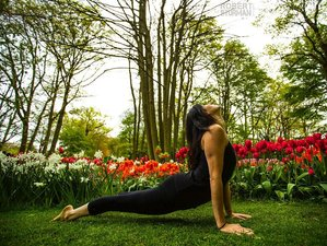 Self-Paced 200-Hour Online Yoga Teacher Training with a Multidisciplinary Curriculum