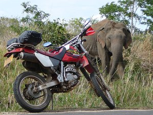9 Day Guided Adventurous Colombo Loop Motorcycle Tour in Sri Lanka