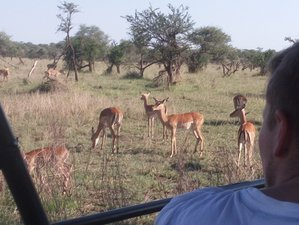 4 Days Group Camping Budget Safari in Tanzania