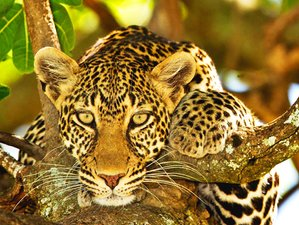 8 Days Best of Wildlife Cultural Safari in Tanzania