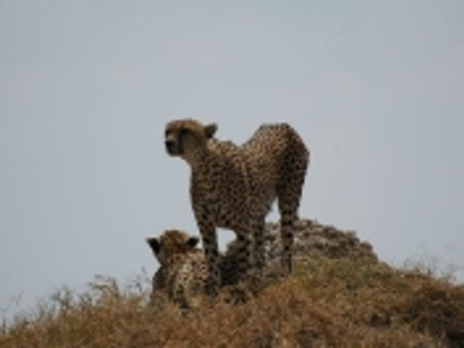 7 Days Affordable Safari Tanzania