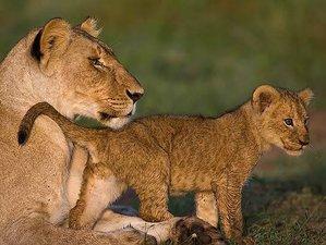 4 Days Flying Safari in Kenya