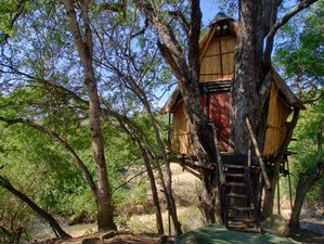 4 Days Exhilarating Treehouse Budget Safari Kruger National Park South Africa
