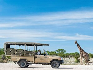 4 Days Budget Onguma Game Reserve and Etosha National Park Safari