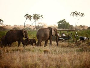3 Days Exciting Masai Mara Safari in Kenya
