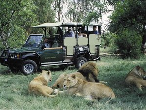 3 Days Wonderful Classic Safari in South Africa
