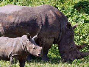 3 Days Murchison Falls National Park And Ziwa Rhino Sanctuary Safari in Uganda