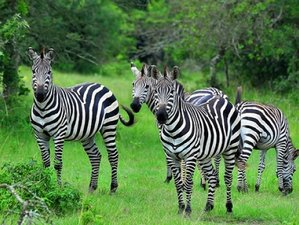 2 Days Lake Mburo National Park Wildlife Safari in Uganda