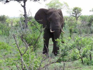 4 Days Exciting Kruger Park Safari in South Africa