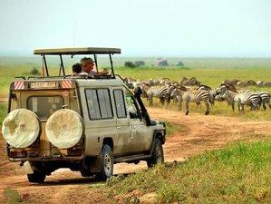 2 Days Serengeti National Park Safari in Tanzania