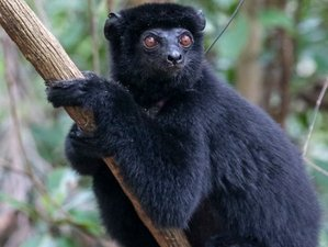 17 Days Private Wildlife and Nature Tour Off The Beaten Path in the Great North of Madagascar