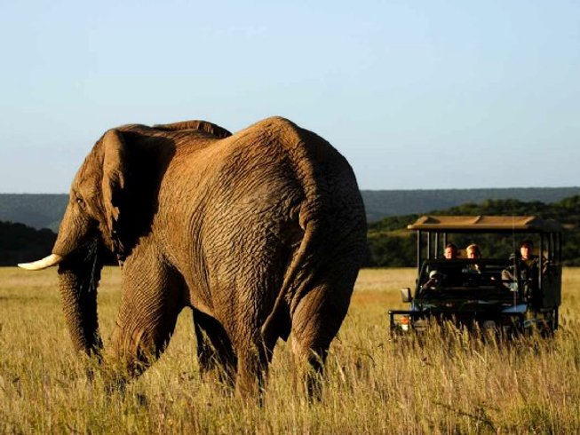12 Days South Africa Safari and Tour