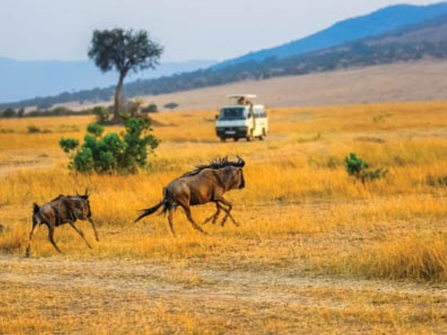 3 Days Classic Wildlife Safari in Kenya