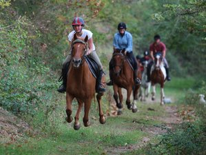 8 Day the Original Horse Riding Holiday in Asprieres, Aveyron