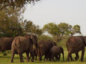 3 Days  Tanzania Nyerere National Park Safari