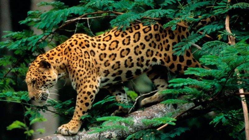 7 Day Guided Wildlife Tour in Manu National Park, Cusco - BookAllSafaris.com