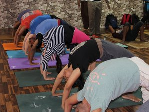 30 Days 200hr Yoga Teacher Training in Palampur, India