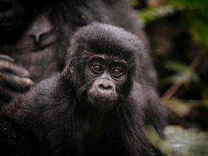 8 Day Gorilla Trekking and Safari Tour in Kenya and Uganda