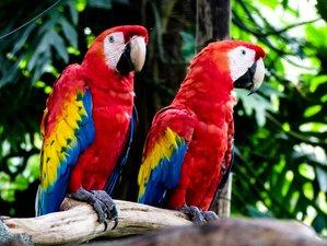 13 Day Birdwatching Wildlife Tour in Costa Rica