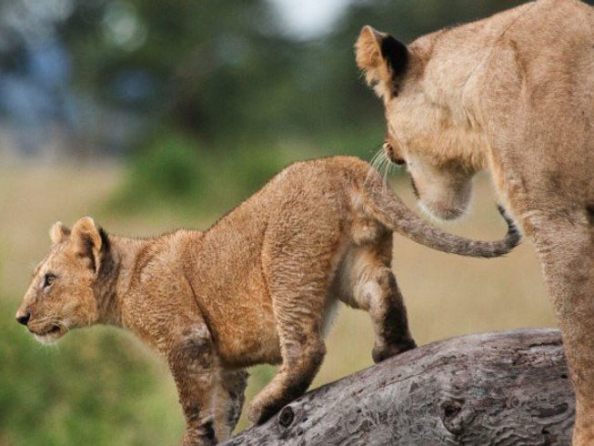 9 Days Mozambique, Swaziland and South Africa Safari