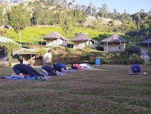 15 Tage Yoga und Ayurveda Camp Spezial Über Weihnachten und Neujahr in Kerala