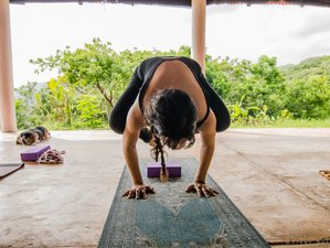 23 Days Yoga, Permaculture and Movement 200 hours Teacher Training in Veracruz, Mexico