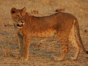 10 Days Big Cats Adventure Private Budget Safari in Northern Tanzania