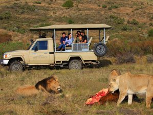 3 Days Private Tour and Safari in Cape Agulhas and Little Karoo, South Africa (Private & Guided)