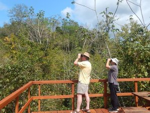 6 Day Incredible Guided Birding Tour in Belize for Family, Couples, and Solo Travelers