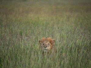 6 Days Camping Safari in Masai Mara, Kenya