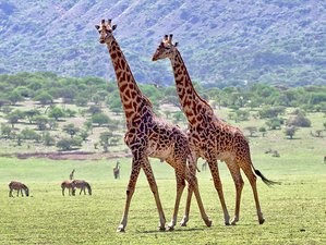 3 Days All-inclusive Private Camping Safari in Northern Circuit of Tanzania
