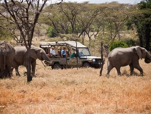 2 Days Masai Mara Flying Safaris in Kenya