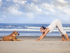 8 Days Luxury Yoga Retreat in Goa, India