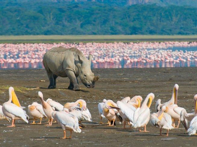 4 Days Lake Nakuru and Masai Mara Safari in Kenya