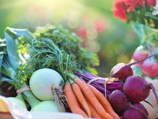 Detox Health Farms