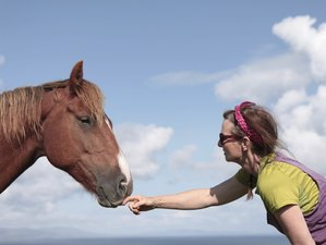 5 Days Connecting with Horses Yoga Retreat in Clare Island, Ireland