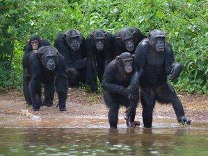 13 Days Stunning Adventurous Safari Tour in Uganda