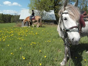 2 Days of Rustic Gourmet Food and Countryside Galloping for Experienced Riders in Ikaalinen