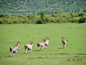 4 Days Lodge Safari in Lake Manyara, Serengeti, and Ngorongoro Crater, Tanzania