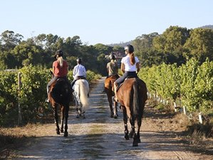 7 Days Trail Horse Riding Holiday in Esposende, Portugal