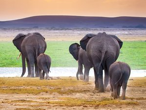 5 Days Tarangire, Ngorongoro Crater, and Lake Manyara Safari in Tanzania