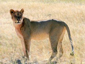 3 Days Chobe National Park Safari