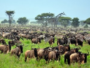 7 Days Best of Safari in Tanzania
