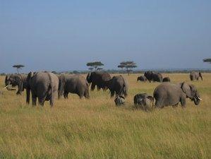 7 Days Highlights of Kenya Safari Tour